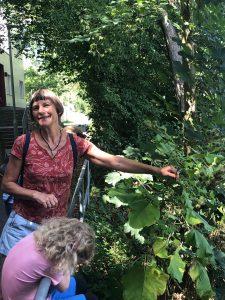 Kräuterwanderung für Backtag mit Kräuterzubereitung @ Vereinsheim